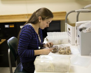 Jessica Watson examines the faunal materials from the Hornblower II site