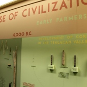 Image of 1970s era exhibition showing corn cobs and other artifacts from Tehuacan Valley, Mexico.