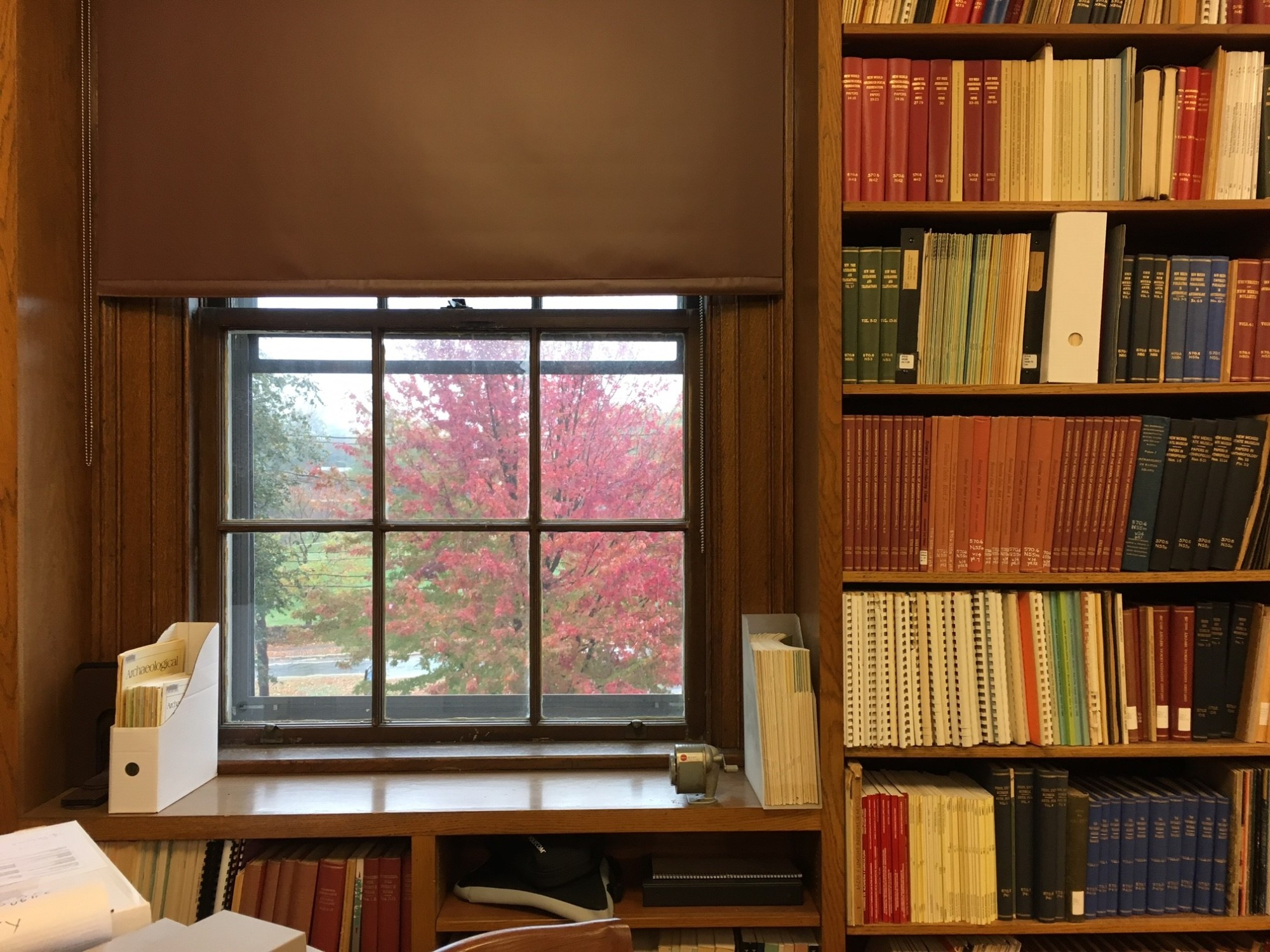 A color photograph of the Peabody's library and a window looking out onto a red-colored tree outside.