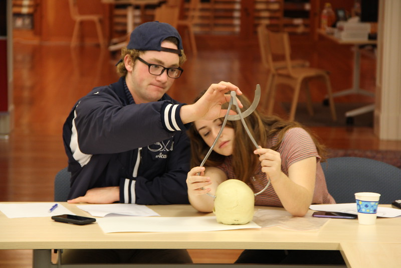 Image of students using calipers to measure skulls.