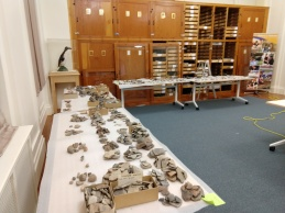 Sherds removed from storage and placed into numerical order