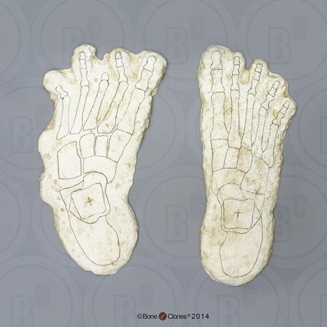 Image of Big Foot casts.