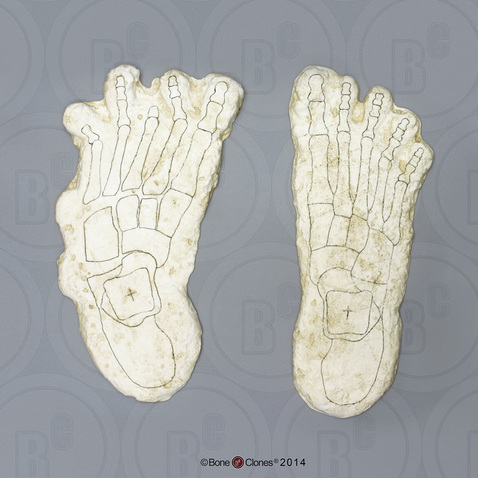 Image of Big Foot casts.