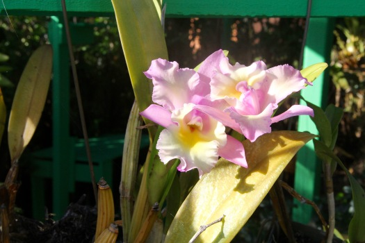 Image of pick and white orchids.
